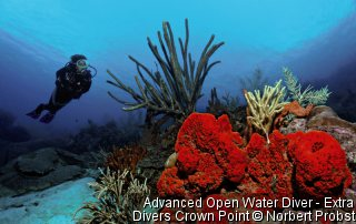 Advanced Open Water Diver - Extra Divers Crown Point